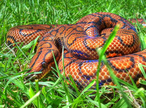 Beautiful snake