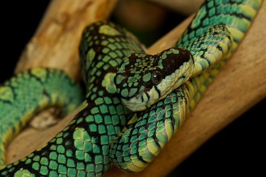 two beautiful snakes