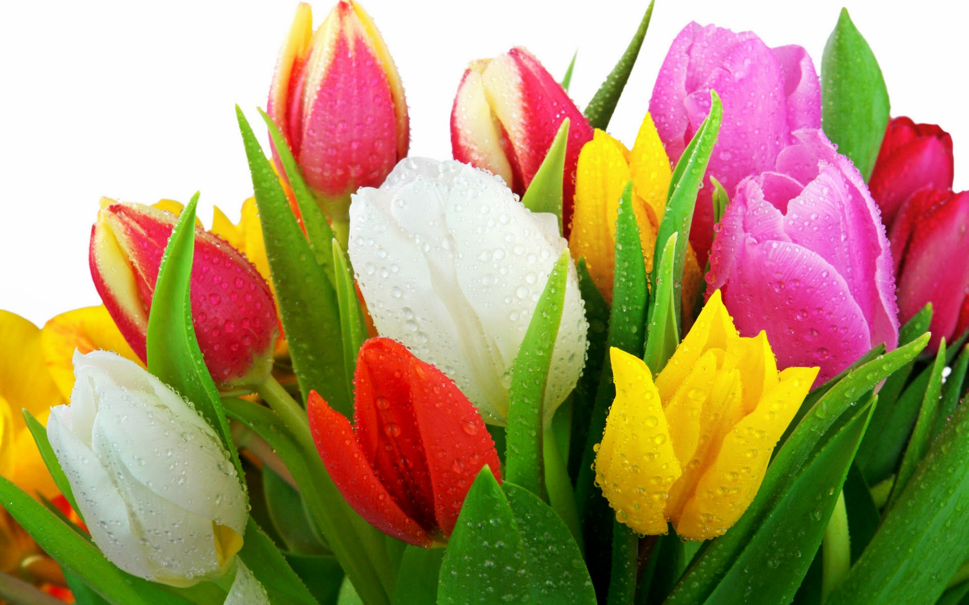 Happy March Images Colorful Tulips