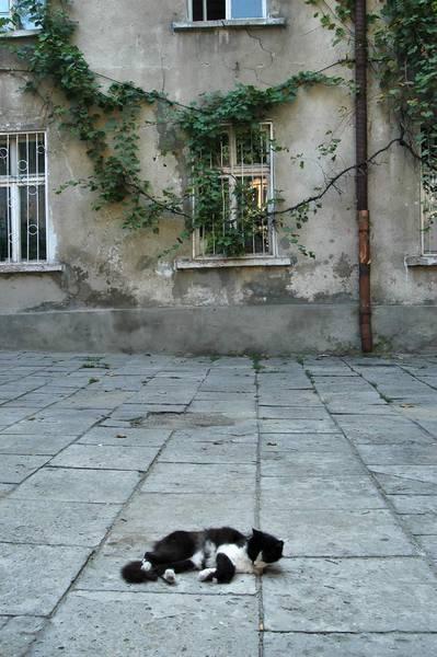 Odessa courtyard w kitty