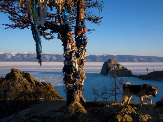 mother-tree shaman tree lake-baikal-siberia