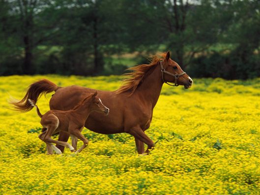 Beautiful horse and baby