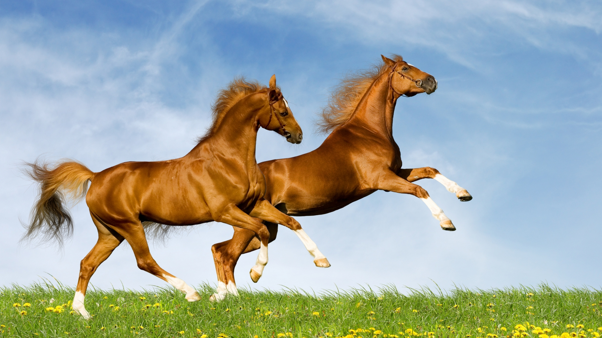 Chinese New Year Of The Horse Predictions By Feng Shui Master Lada