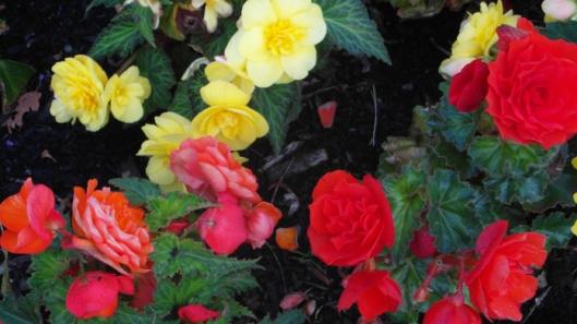 tales flowers2