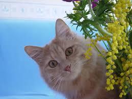 Mimosa cat
