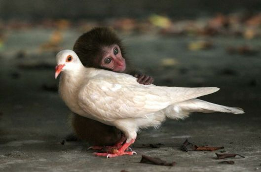 baby monkey and dove