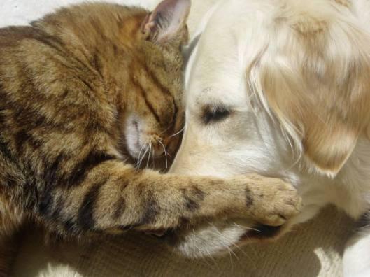 happy dog and cat 2
