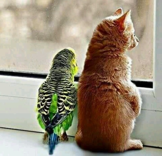 kitty and parrot