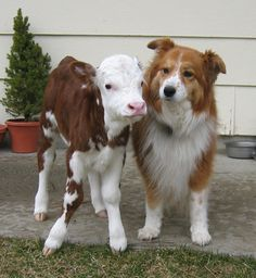 little lamb and dog