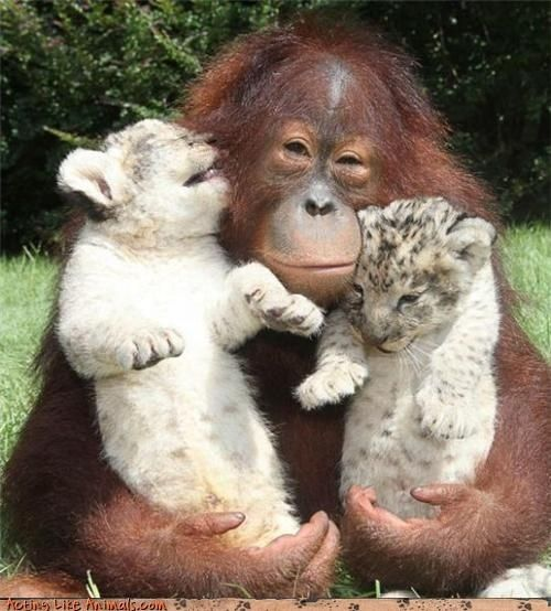 monkey and jaguar babies