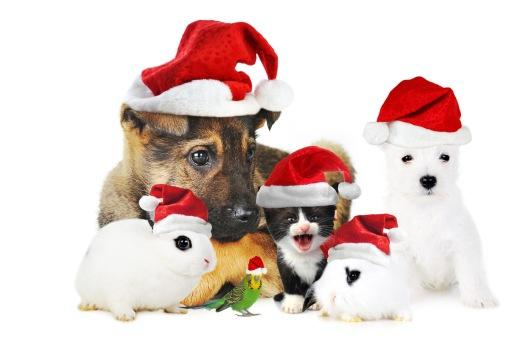 peace on earth christmas animals