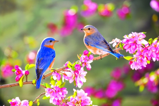 colorful birds in spring